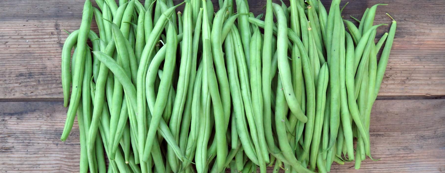 Beans Beans Beans!