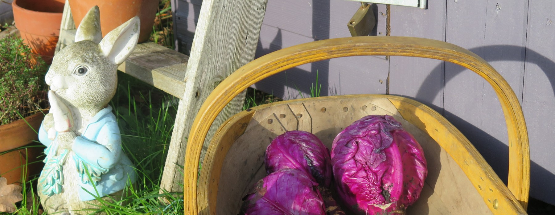The Forgotten Cabbages…