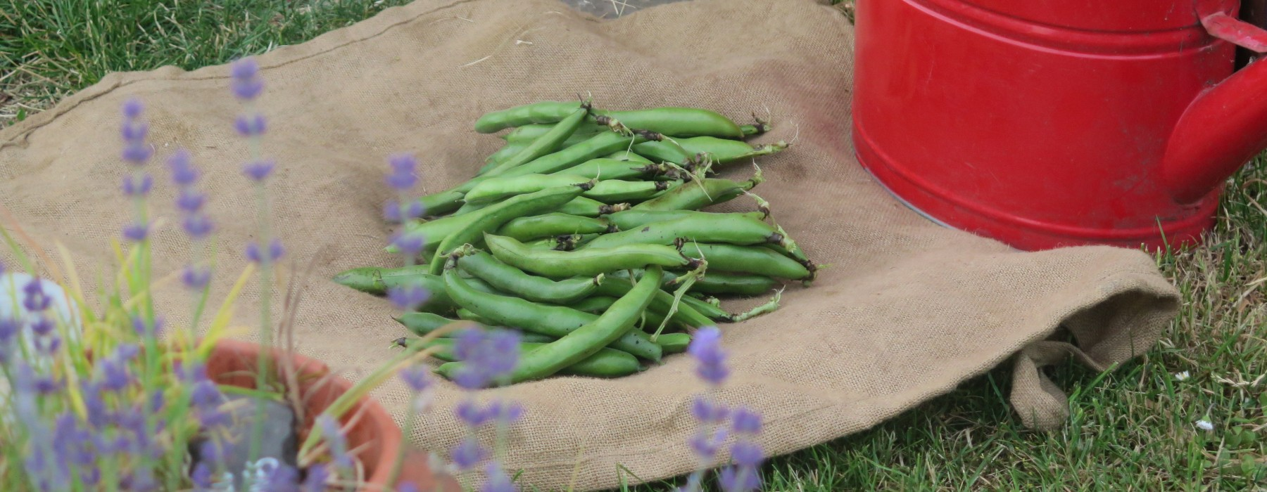 Broad beans and Flowers