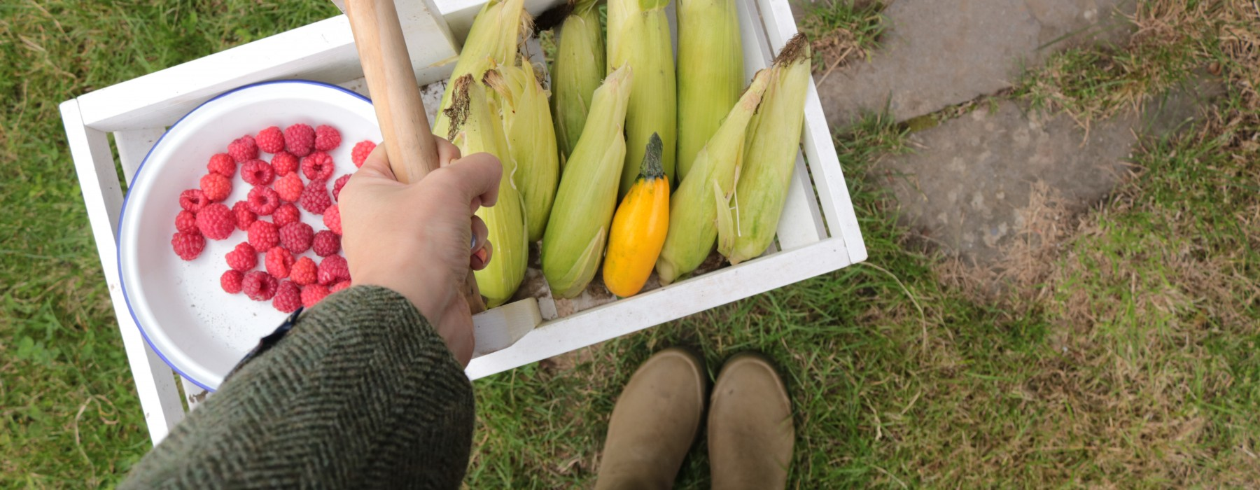 A rather small Autumn harvest…