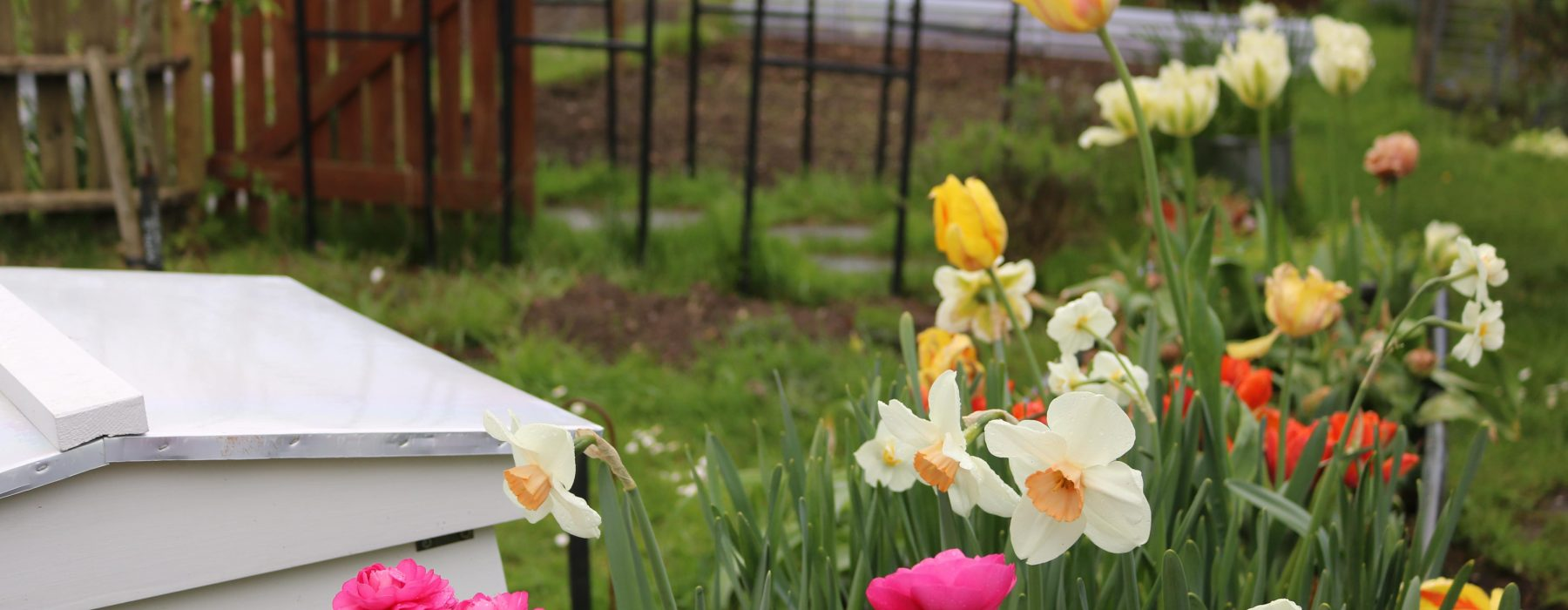 The Spring Bulb Trough