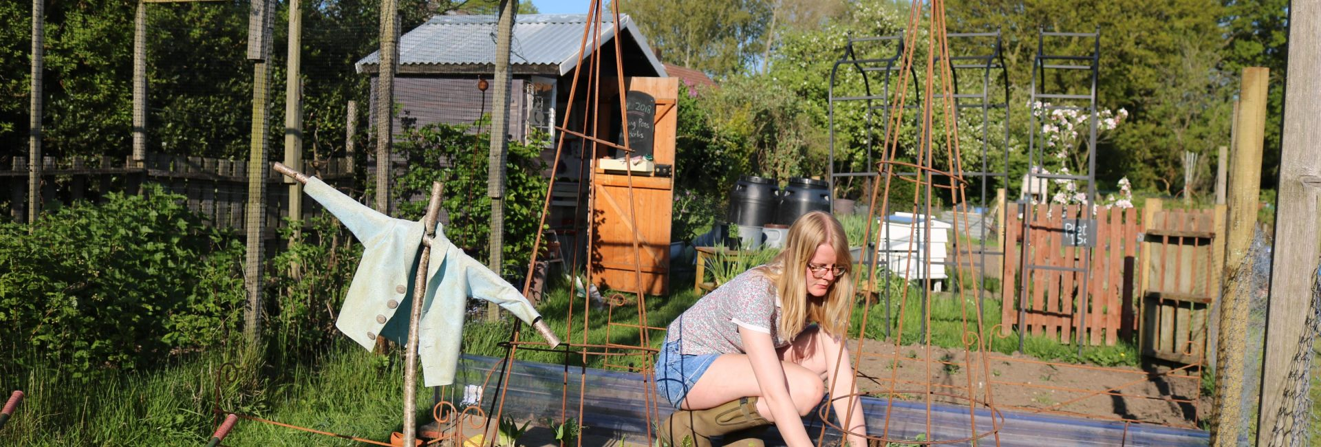 Planting Peas and Herbs