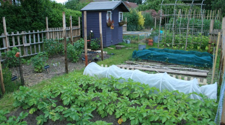June – Allotment Updates