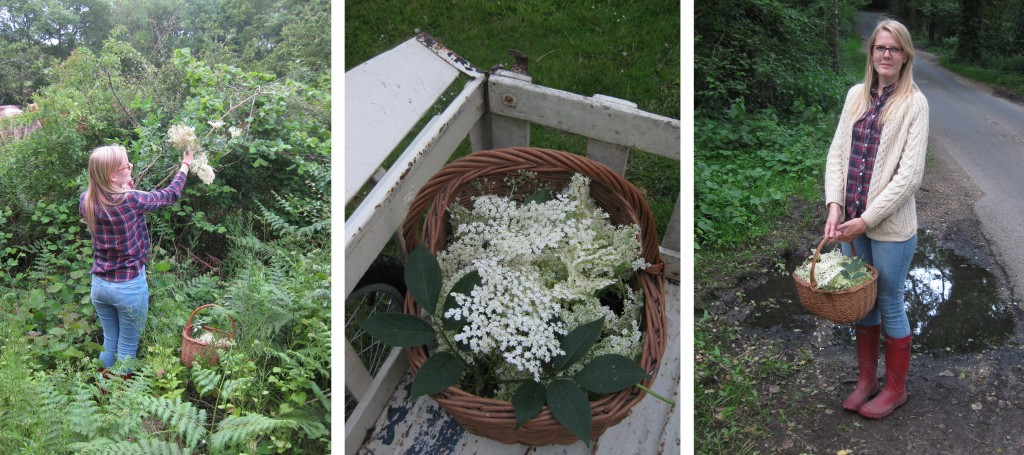 elderflowerforage