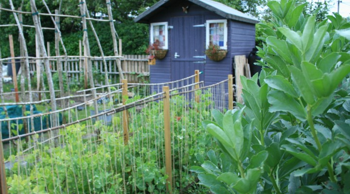 Katie's Allotment Video – Jobs in June!