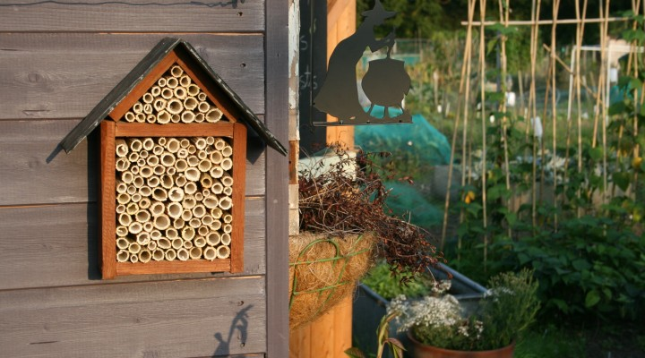 New Video – Bee Hotels and Harvests