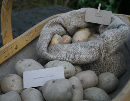 Potatoes and Primroses