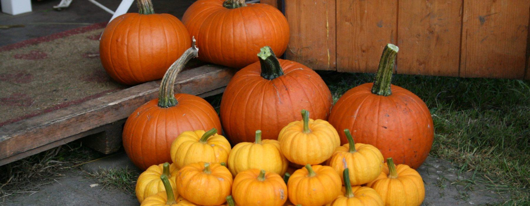 My Little Pumpkin Harvest