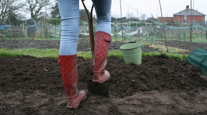 The All Weather Gardener