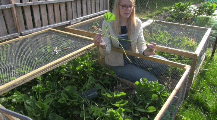 August 2014 – Harvesting and Tidying
