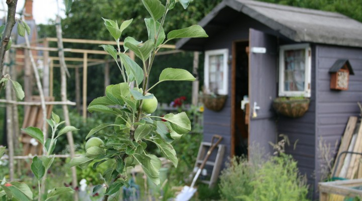 June 2015 – New Plans and the Apple Tree