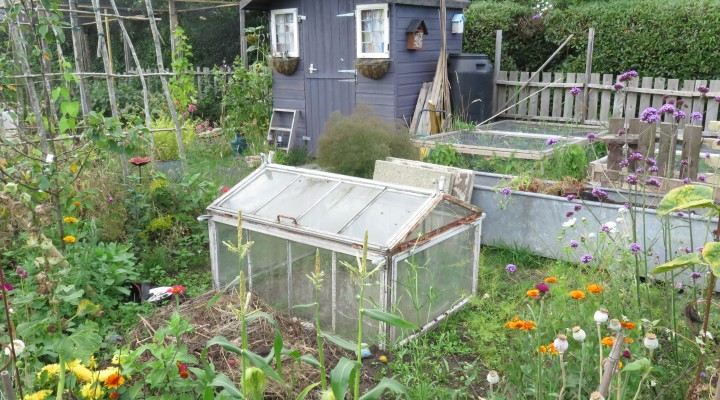 Back to reality and one weedy plot…