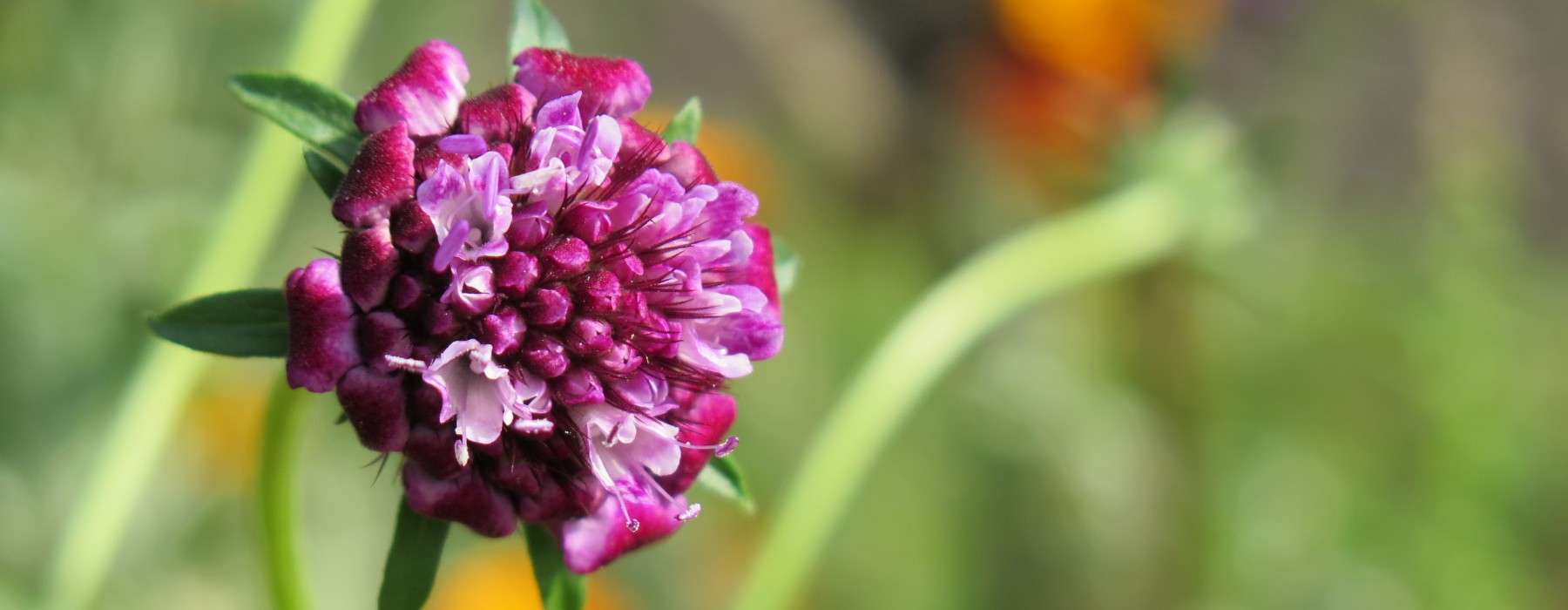 Homegrown Flowers