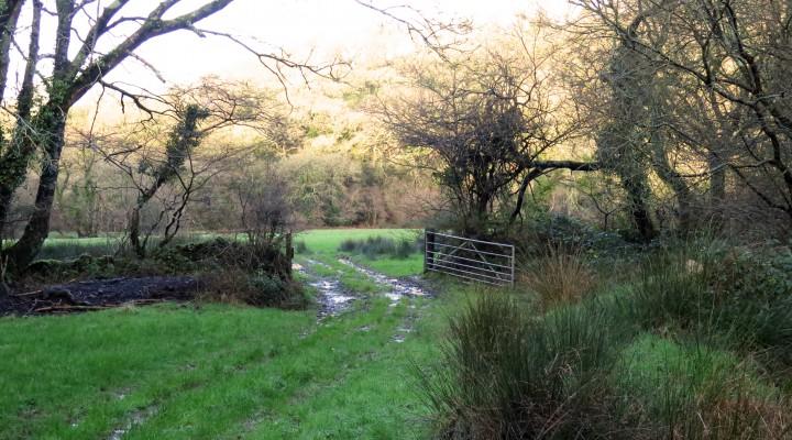 The Farm Walk