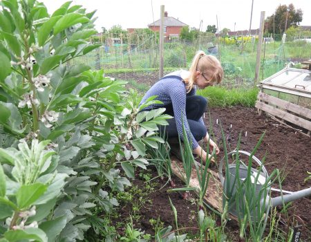 June 2016 – Planting, Sowing and Harvesting