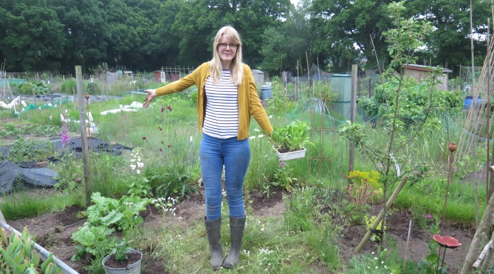 June 2016 – The Flower Patch