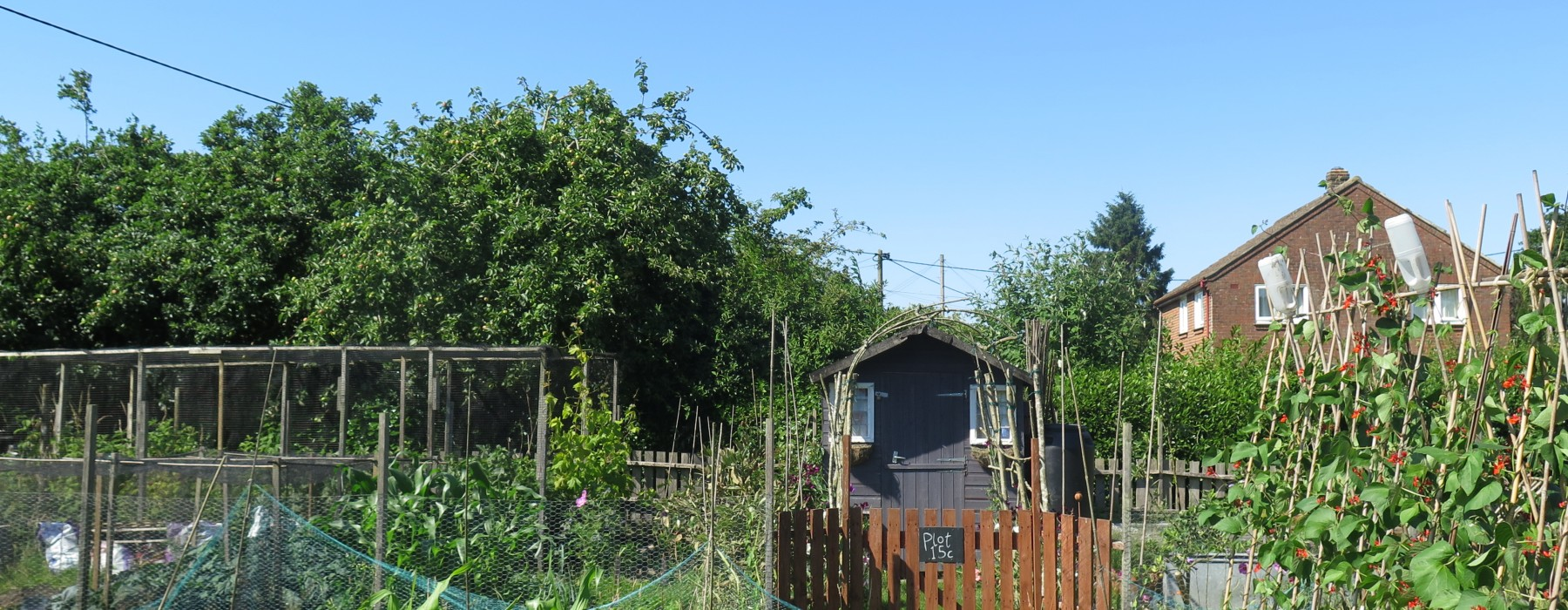 Blue Skies, Potatoes and the Second Growing Season