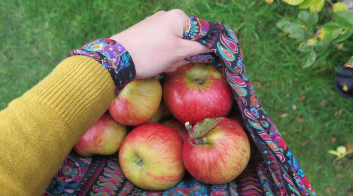 Apple Season