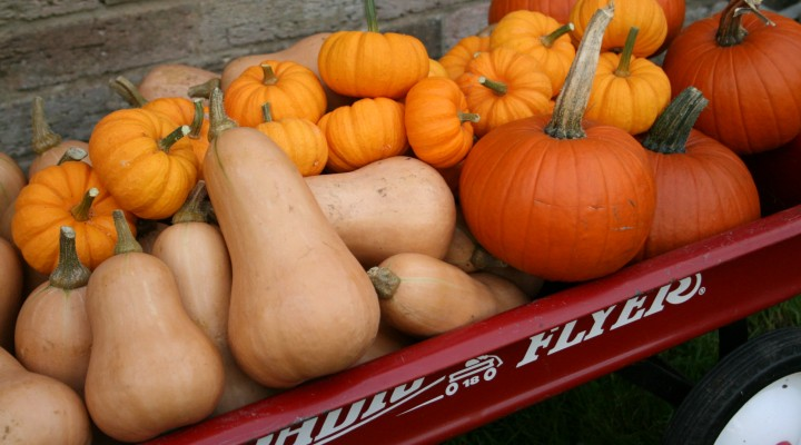 Pumpkin Harvests of the Past!