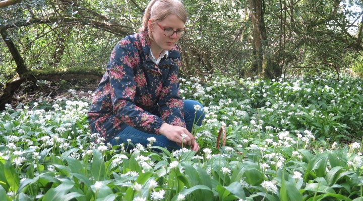 Wild Garlic Season
