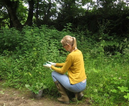 How to Make Nettle Fertiliser