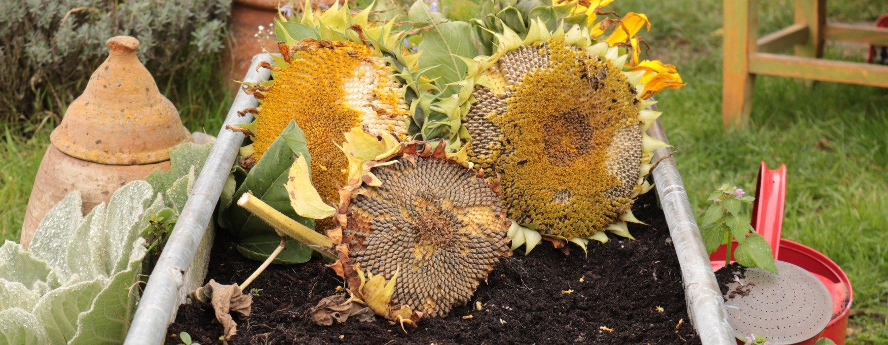 The Year of the Sunflower