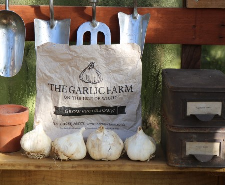 How to grow Garlic in a Container
