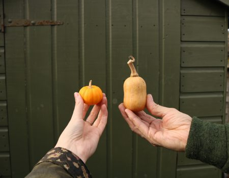 The last of the squash