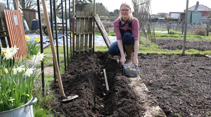April 2018 – Planting Potatoes