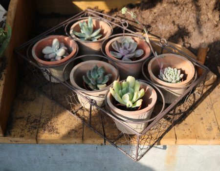 Basket with 6 Pots