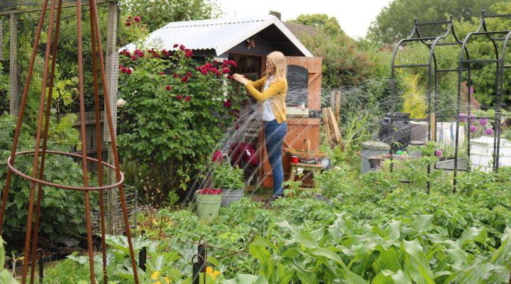 June 2018 – Sprinkler, Comfrey Fertiliser and Netting