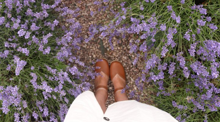 In Love with Lavender