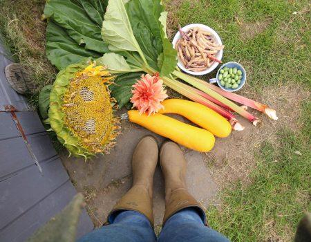 Happy Harvests