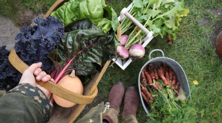 Winter harvests and prepping for next years crops
