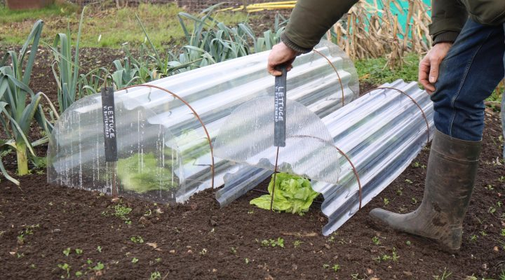 Bring on February and roll out the Cloches!