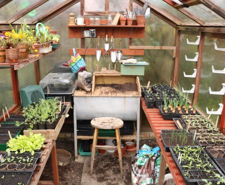 Greenhouse Sowings