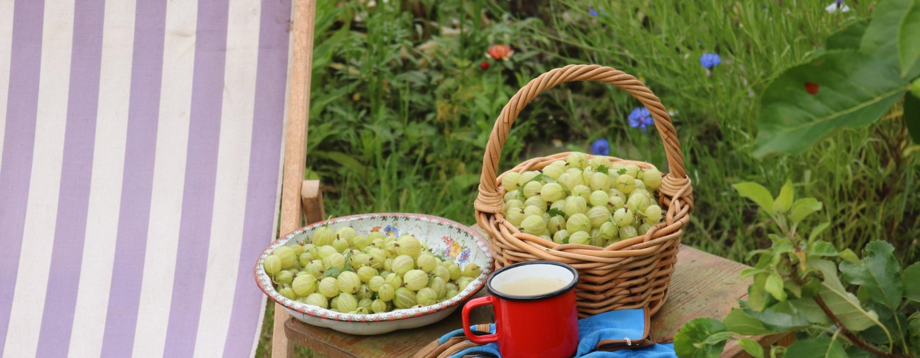 The Gooseberry Appreciation Post