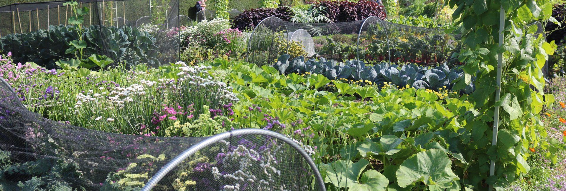 RHS Wisley and my dream garden!