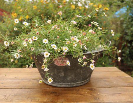 Galvanised Bowl #24