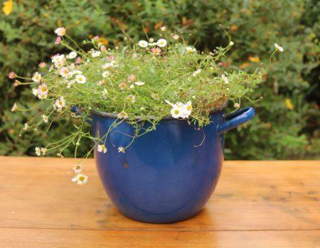 Blue Enamel Pot #4