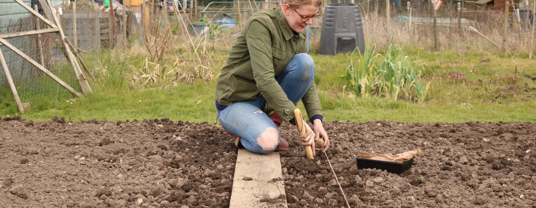 Potato Planting And Seed Sowing Lavender And Leeks