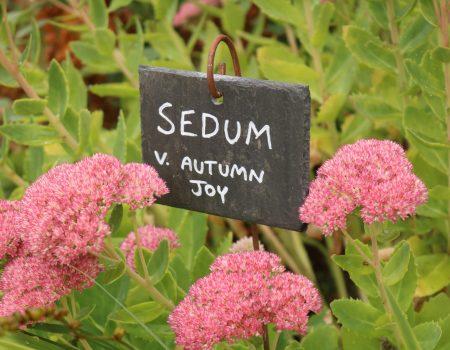 4 Rectangle Slate Plant Labels